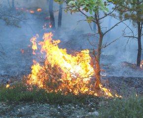 Feuer Brandenburg 2003 /Foto Tilo, GNU