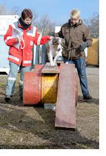 Rettungshunde-Bewerber beim Casting. Foto: Björn Wuttig/DRK-Region Hannover