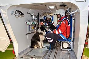 Rettungshund während des Simulationsfluges im Christoph Life (Foto: Johanniter/Sebastian Middeke)