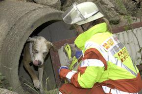 Auch Rettungshundestaffeln gehören zum ASB.