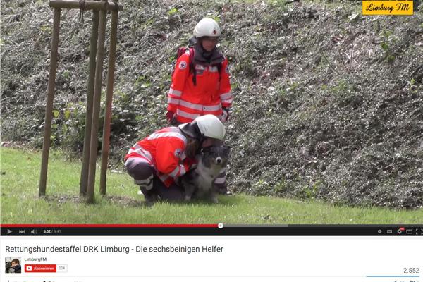 Rettungshund des DRK Limburg bei der Arbeit. Screenshot: YouTube