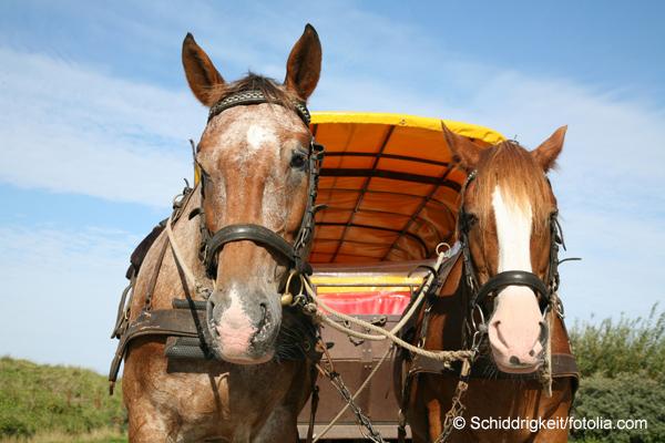 Pferdekutsche2
